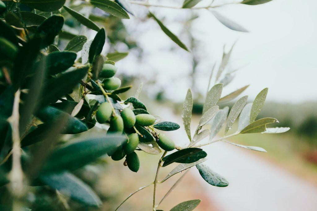 Aceite de oliva que pica: ¿Es mejor o ...
