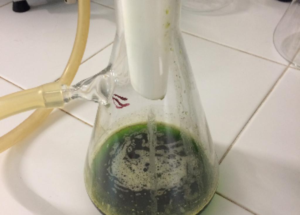 El escualeno, ¿será el omega2 de los aceites?